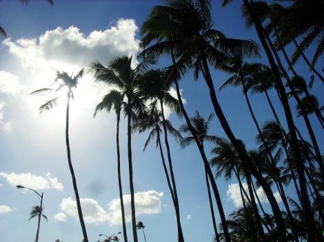 hawaii-2-004